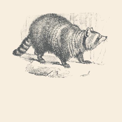 Raccoon Spirit Animal Totem