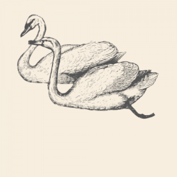 Swan Animal Spirit Medicine Logo