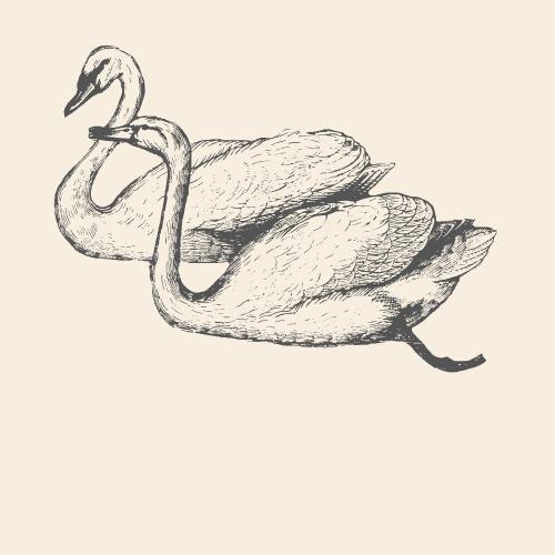 Swan Animal Spirit Medicine Logo