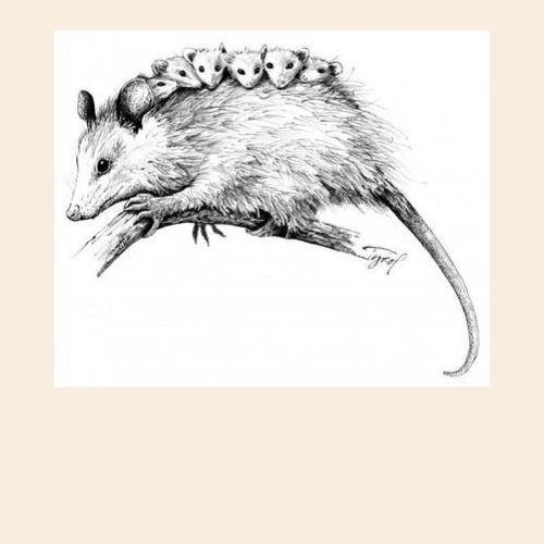 Oppossum Animal Spirit Medicine Logo