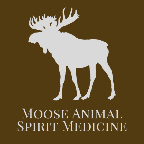 Moose Animal Spirit Medicine